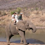 Touraco Tours and Transfers - Elephant Ride at Sun City
