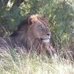 Touraco Tours - Kruger Safari