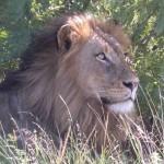 Touraco Travel Services - Kruger Safari