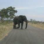 Touraco Tours - Kruger Safari - Elephant