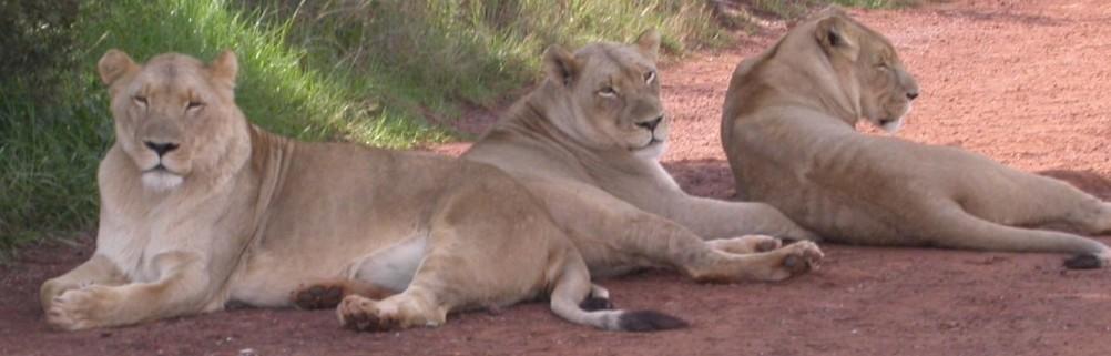 Lion & Rhino Park