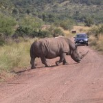 Touraco Tours and Transfers : White Rhino