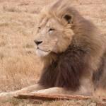 Touraco Tours - Lion & Rhino Park