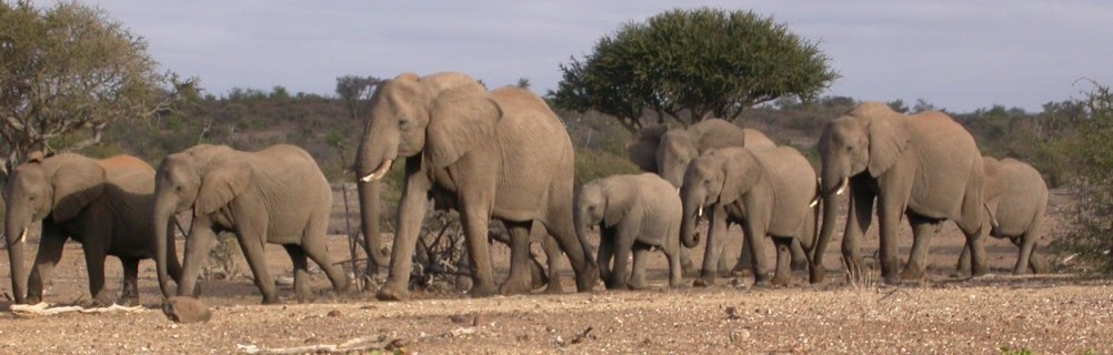 Botswana - Tuli Block - Elephants