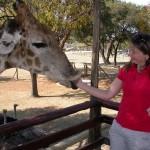 Touraco Tours : Giraffe Feeding