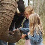 Touraco Tours and Transfers - Elephant Tours