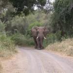 Touraco Travel Services - Bull Elephant - Kruger Park Tour