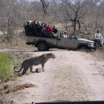 Touraco Travel Services - Game Drive - Kruger Park Safari in Luxury Lodge 3 Days