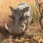 Touraco Tours and Transfers - Pilanesberg National Park