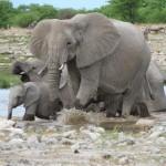 Touraco Travel Services - Elephants - Etosha Safari