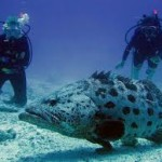 Touraco Travel Services - Scuba Diving on Zanzibar