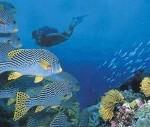 Touraco Travel Services - Mozambique Beach & Scuba Dive Holiday