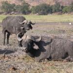 Touraco Travel Services - Okavango Delta, Chobe National Park & Victoria Falls