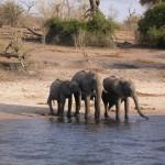 Touraco Travel Services - Botswana Safari