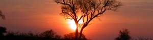 Touraco Tours and Transfers - Kruger sunset