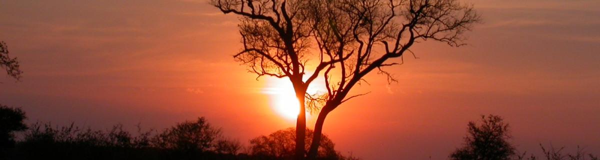 Kruger Park Safari in Luxury Lodge – 3 Days