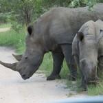 Touraco Tour and Transfers - Kruger Park Safari