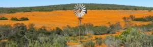 Touraco Tours - Namaqualand Tour