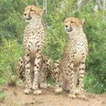 Touraco Travel Services - Kruger Park Safari