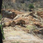 Touraco Tours - Pilanesberg Safari