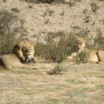 Kruger Safari - Touraco Travel Services - Pretoria, South Africa