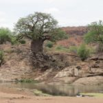 Touraco Travel Services - Kruger Safari